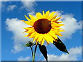 SO6424 : Sunny side up : Week 35