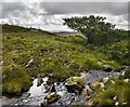 NR3465 : Allt Garbh, near Scarrabus, Islay by Becky Williamson