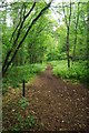 SJ8243 : Path Through Springpool Wood by Glyn Baker