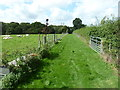 SU8827 : Sheep by pleasant path by Lower Hawksfold by Dave Spicer