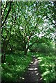 TQ5385 : Wooded footpath by Nigel Chadwick