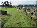 SK3360 : Footpath from Blakelow Farm towards Tansley Knoll by Chris Wimbush