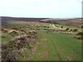 ST1239 : Summit plateau of the Quantocks by Oliver Dixon