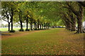 TQ2475 : Avenue of trees in Wandsworth Park by Philip Halling