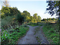 SJ8787 : Path to Ladybrook Valley by David Dixon