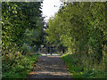 SJ7288 : Trans Pennine Trail by David Dixon