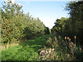 ST5884 : Southwest edge of Ellen's Wood  by Robin Stott