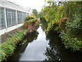 TQ2573 : River Wandle by Ian Yarham