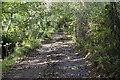 SW6228 : Muddy lane by Elizabeth Scott