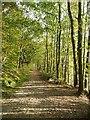SE2149 : Footpath past Lindley Wood Reservoir : Week 40