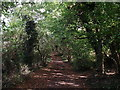TQ4162 : Bridleway to Furze Bottom (2) by David Anstiss