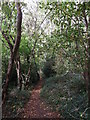 TQ4160 : Footpath in Crown Ash Hill woods by David Anstiss