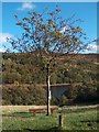 SK1887 : Tree, bench and view at Hurst Clough car park by Neil Theasby