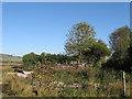TQ4507 : Ruin, Littledene Lane by Simon Carey