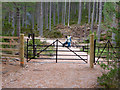 NH9007 : Gates and fire beaters near Loch an Eilein, Rothiemurchus Forest by Phil Champion
