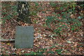 SK5752 : Memorial in the woods by Alan Murray-Rust