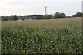 SK5653 : Maize crop near Ravenshead by Alan Murray-Rust