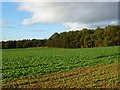 NZ2708 : Farmland and plantations, Croft-on-Tees by Andrew Smith