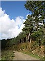 SX5160 : Pines, Henroost Wood by Derek Harper