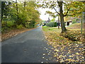 SU9635 : A leafy Pockford Road Chiddingfold by Dave Spicer