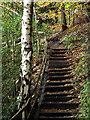 SO8992 : Stepped trail in Baggeridge Country Park near Sedgley by Roger  Kidd