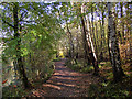SO8992 : Pathway in Baggeridge Country Park near Sedgley by Roger  Kidd