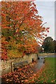 SK1969 : Autumnal Tree on Fennel Street by Mick Garratt