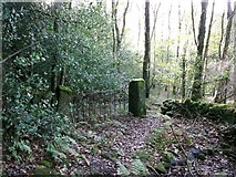 SE0024 : Footpath and gate, Hollin Hey Wood, Mytholmroyd  by Humphrey Bolton