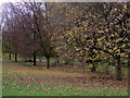 SO8995 : Trees in Muchall Park, Penn, Wolverhampton by Roger  Kidd