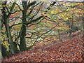 SE7196 : Leafy carpet, Rosedale, mid-Autumn by Pauline Eccles