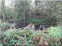 SJ6670 : Boggy pond in woodland by Dr Duncan Pepper