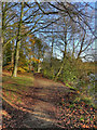 SJ9284 : Path By Poynton Lake by David Dixon