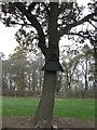 SJ6864 : Tree with Owl nesting box attached by Dr Duncan Pepper