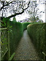 SK6233 : Hedged footpath by Alan Murray-Rust
