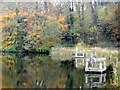 ST9331 : Autumn colour, Fonthill Lake by Miss Steel