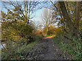 SJ9395 : Riverside Path, River Tame by David Dixon