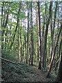 SO5300 : Woodland path near Tintern by Gordon Hatton