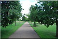 TG2007 : Path in Eaton Park by N Chadwick