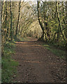 SS8683 : National Cycle Route 4 amidst trees at Cwm Ffos in late autumn by eswales
