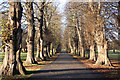 SK5339 : Lime Avenue by Richard Croft