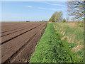 TL4081 : Prepared field by Hugh Venables