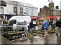 SJ9494 : Holly wreaths £3.95 : Week 49