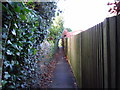 TQ6240 : Alleyway by Chris McAuley