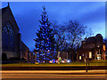 SD8510 : Heywood's Christmas Tree by David Dixon