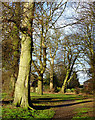 SO8995 : Trees in Muchall Park, Wolverhampton by Roger  Kidd
