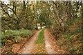 SJ5154 : Footpath near Bickerton by Jeff Buck