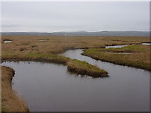 SJ2874 : Tidal gullies in the Burton Marsh by Peter Aikman