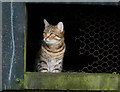 SD4973 : Cat at The Piggeries by Karl and Ali