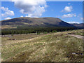 NN5794 : Moorland and coniferous plantation in Glen Markie by Trevor Littlewood