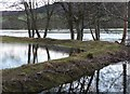 NN9552 : Flooding beside the River Tay by Russel Wills